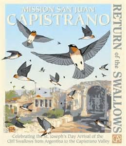 swallows at Capistrano